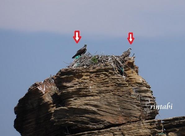 2021年7月 壱岐3 エメラルドグリーンに輝く壱岐ブルー♪辰の島クルーズ_b0205305_16011703.jpg