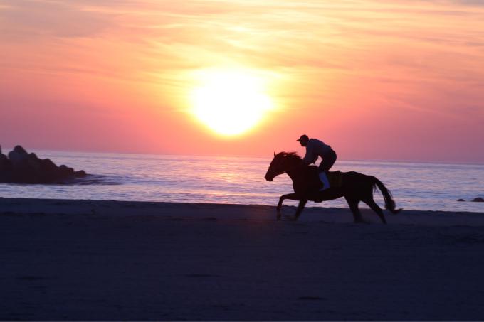 浜辺を走る馬  相馬野馬追い練習風景_c0229025_06131743.jpg