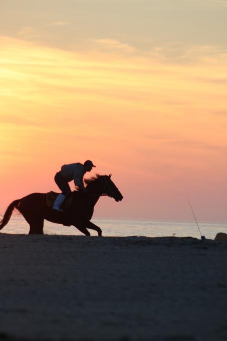 浜辺を走る馬  相馬野馬追い練習風景_c0229025_06131830.jpg