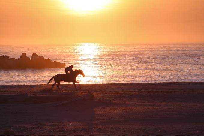 浜辺を走る馬  相馬野馬追い練習風景_c0229025_06132025.jpg