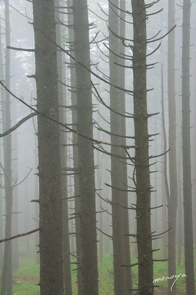 霧の林_c0085877_05204412.jpg