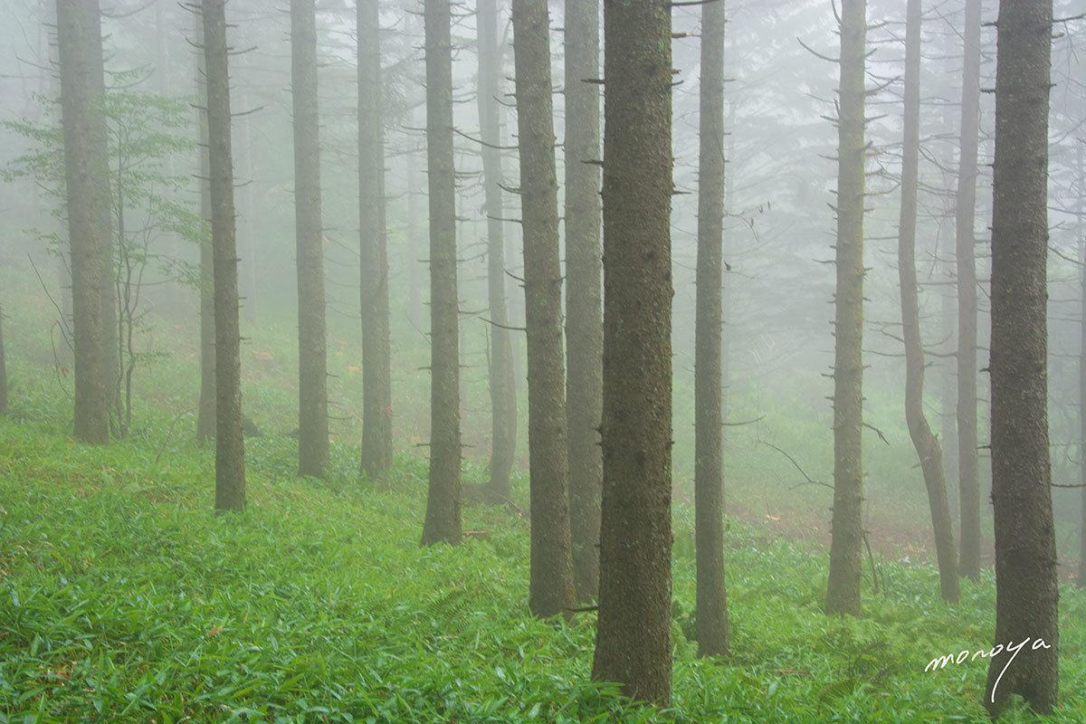 霧の林_c0085877_05204743.jpg