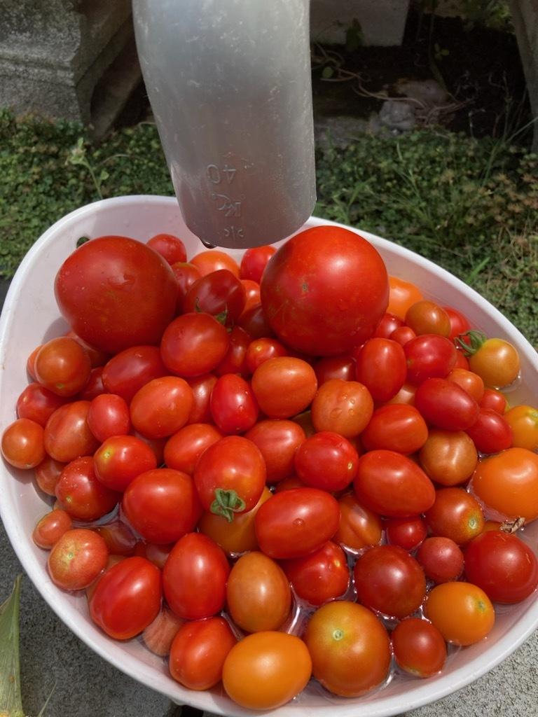 色々と収穫_f0204295_13394577.jpg