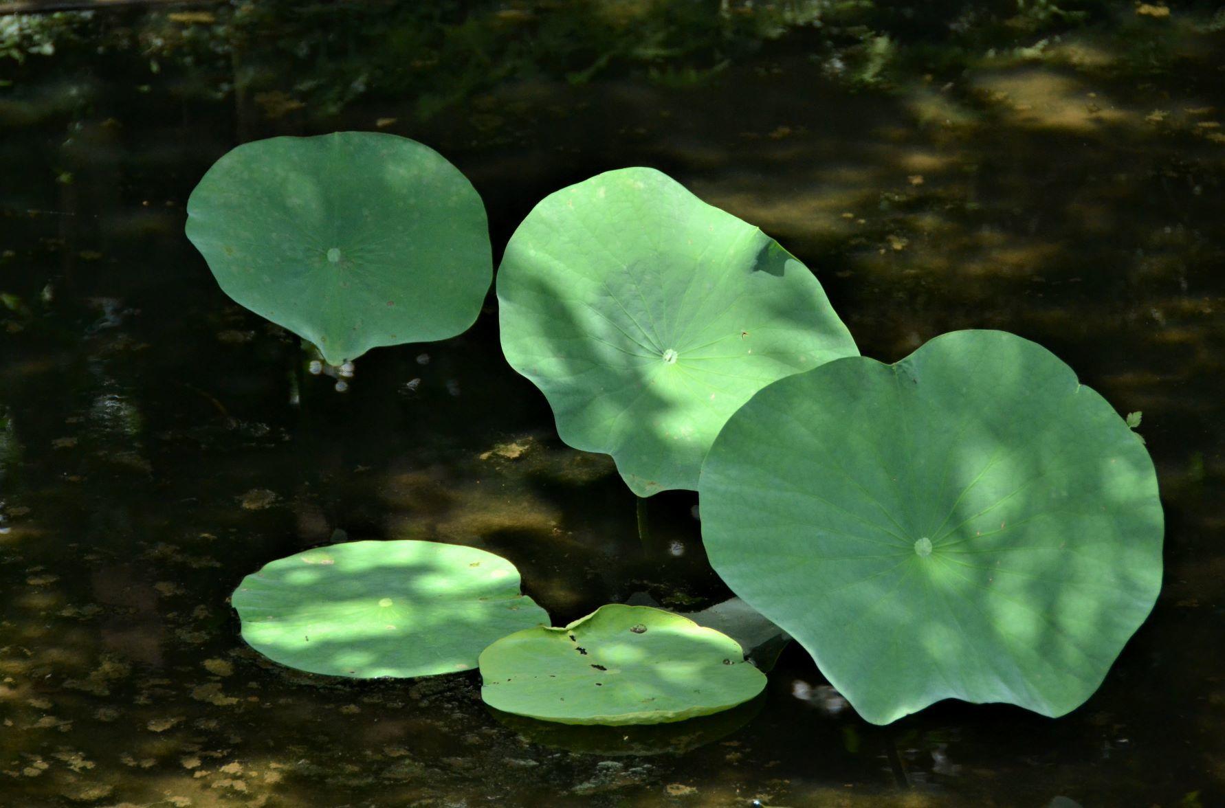 梅雨明けと同時に薬師池公園に・・・_a0053796_11321352.jpg