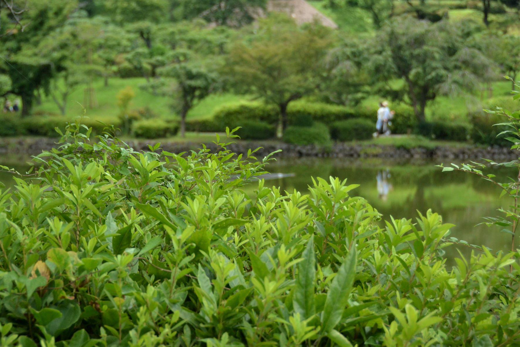 梅雨明けと同時に薬師池公園に・・・_a0053796_11330370.jpg