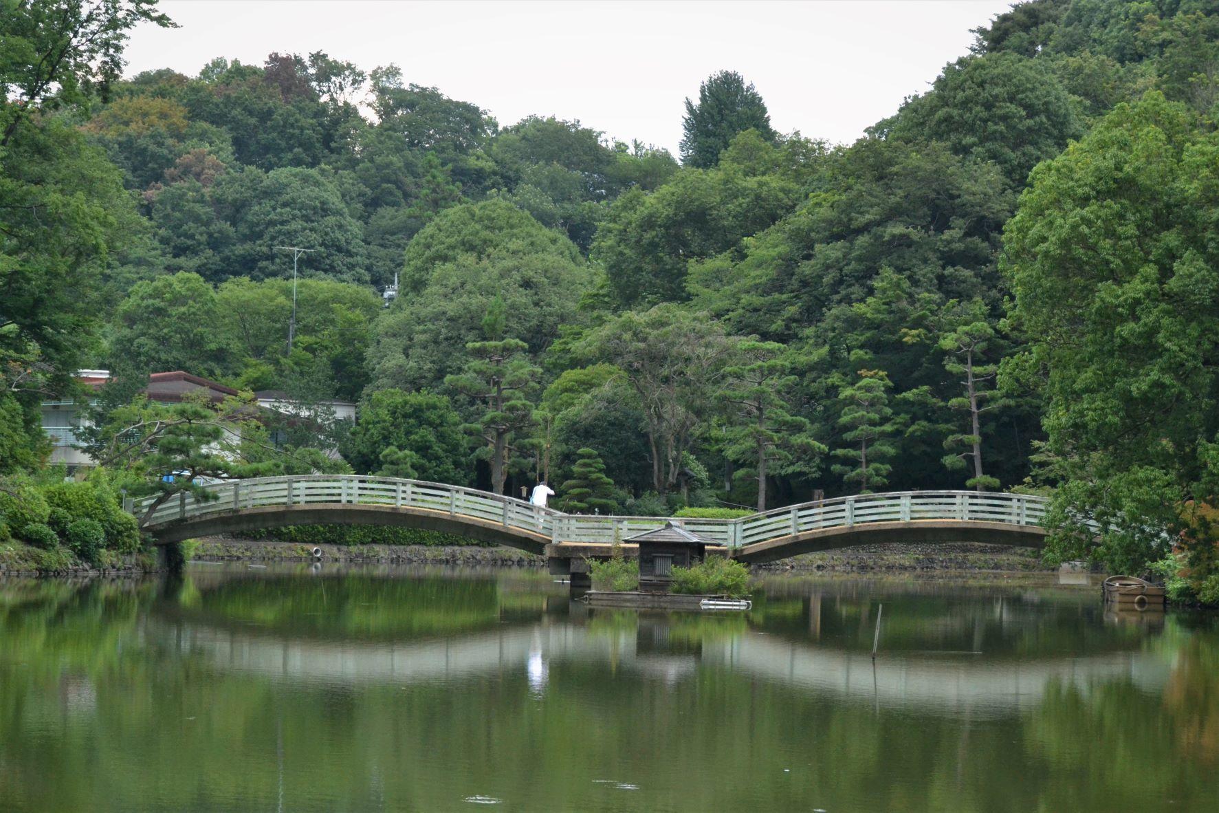 梅雨明けと同時に薬師池公園に・・・_a0053796_11331126.jpg