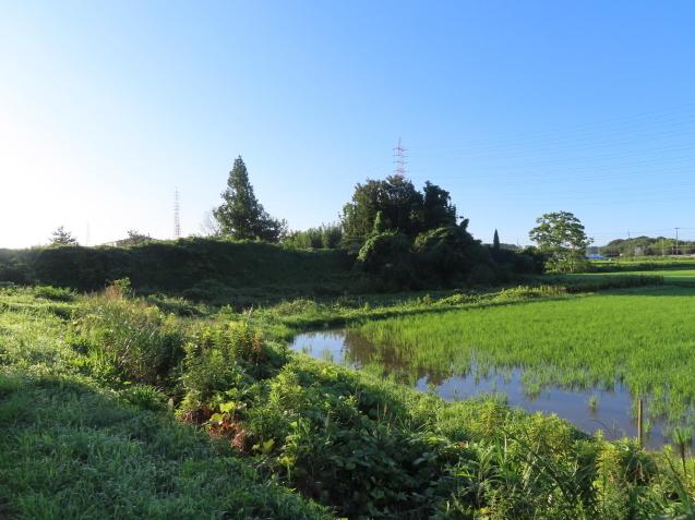 今朝の散歩は暑かった 2021/07/19_d0048812_17421774.jpg