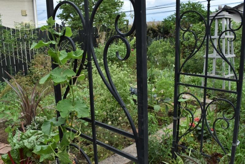 畑をポタジェにしたい!!~植物との混植~_b0280025_15301762.jpg