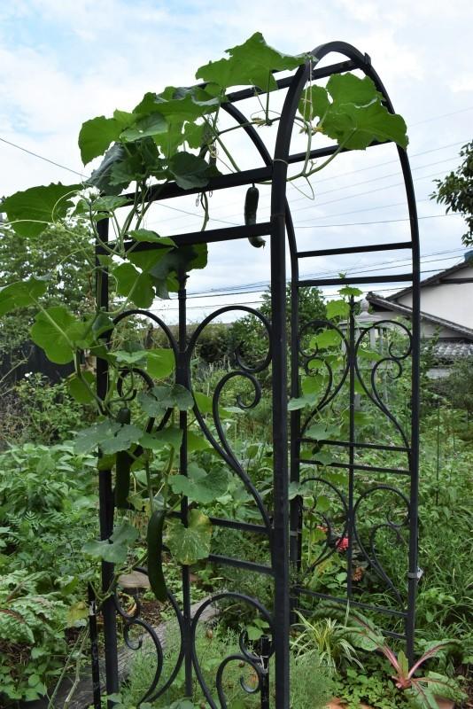 畑をポタジェにしたい!!~植物との混植~_b0280025_15331776.jpg