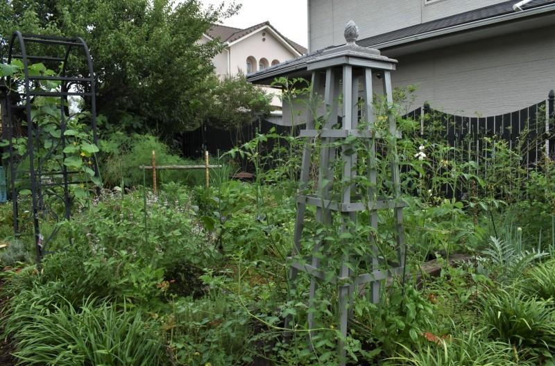 畑をポタジェにしたい!!~植物との混植~_b0280025_15450889.jpg