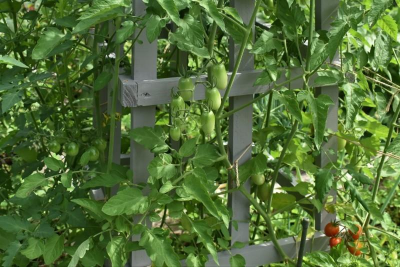 畑をポタジェにしたい!!~植物との混植~_b0280025_15490866.jpg