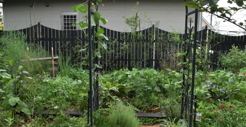 畑をポタジェにしたい!!~植物との混植~_b0280025_15514599.jpg