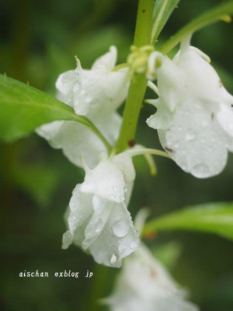 我が家の7月のお庭の花と野菜2と梅仕事~♫_e0406439_13310813.jpg