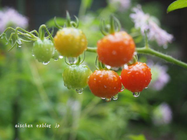 我が家の7月のお庭の花と野菜2と梅仕事~♫_e0406439_13331457.jpg