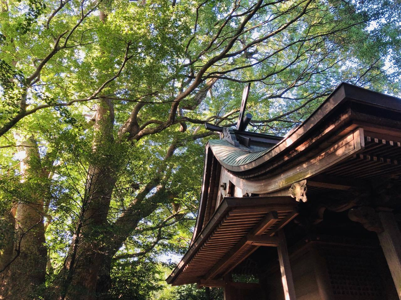 川上神社3 福岡県糟屋郡新宮町_b0023047_02480531.jpg
