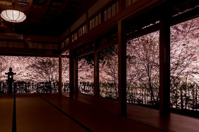2021桜咲く京都  正壽院ライトアップ_f0155048_22133900.jpg