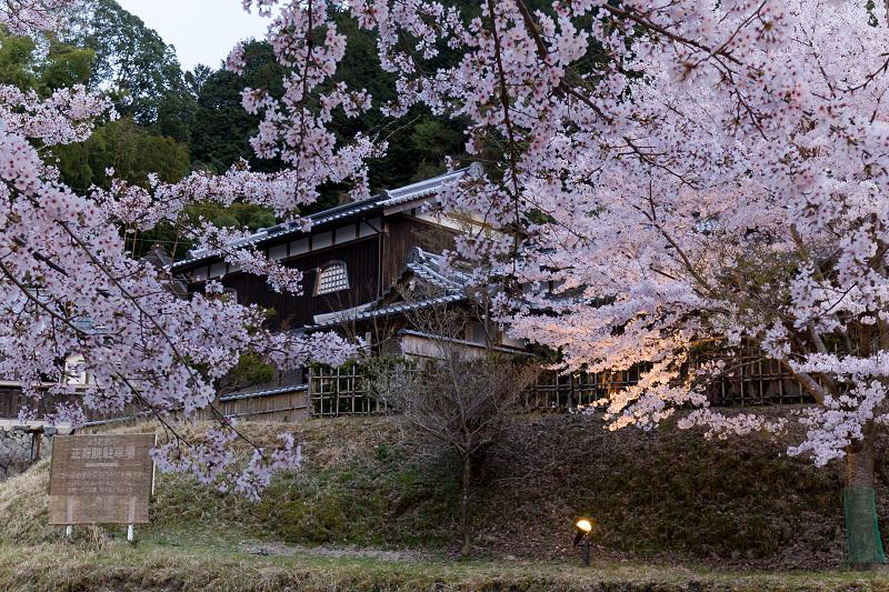 2021桜咲く京都  正壽院ライトアップ_f0155048_22135354.jpg