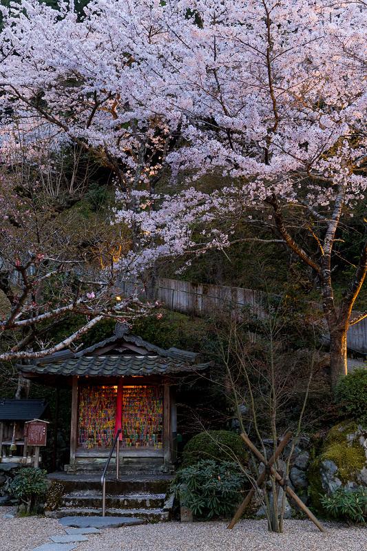 2021桜咲く京都  正壽院ライトアップ_f0155048_22152322.jpg