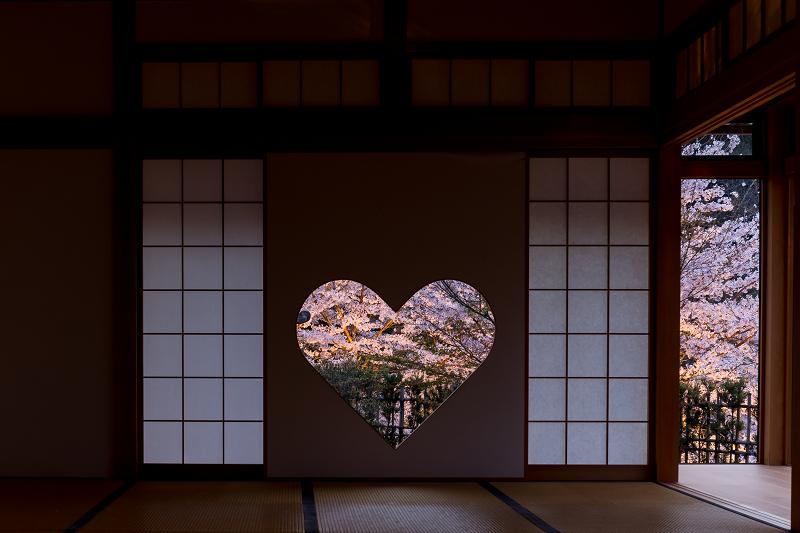 2021桜咲く京都  正壽院ライトアップ_f0155048_22161628.jpg