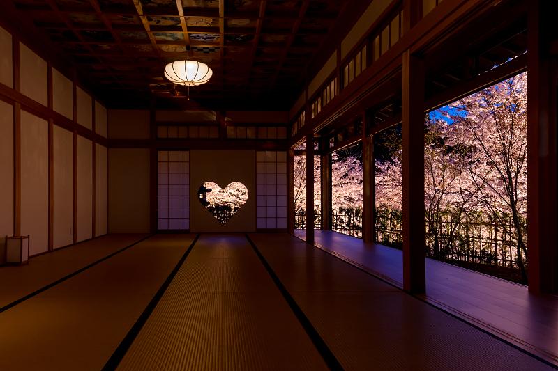 2021桜咲く京都  正壽院ライトアップ_f0155048_22162599.jpg