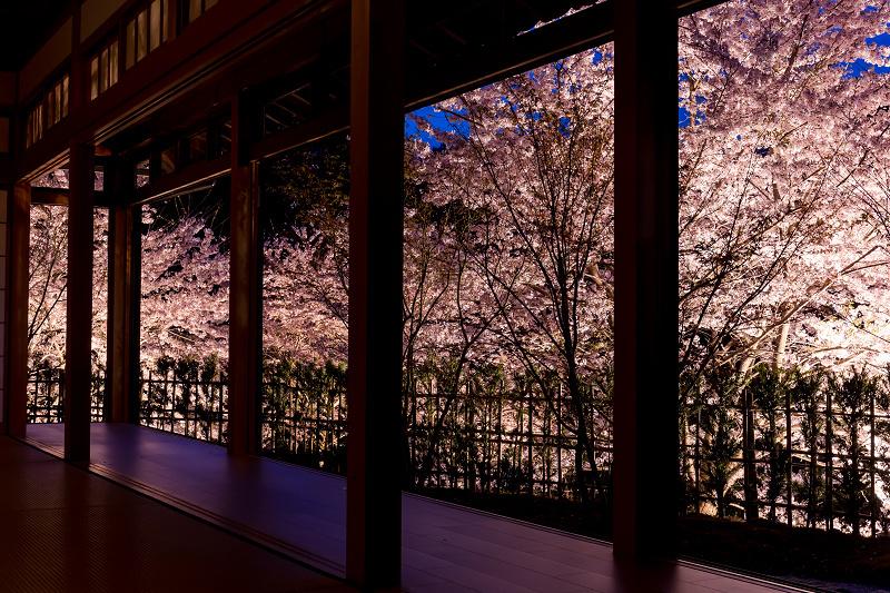 2021桜咲く京都  正壽院ライトアップ_f0155048_22163179.jpg