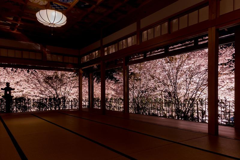 2021桜咲く京都  正壽院ライトアップ_f0155048_22211621.jpg