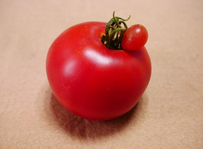 赤ちゃんトマト  2021-07-22 00:00_b0093754_22172383.jpg
