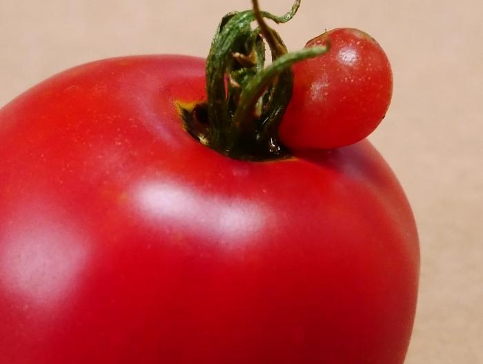 赤ちゃんトマト  2021-07-22 00:00_b0093754_22173357.jpg