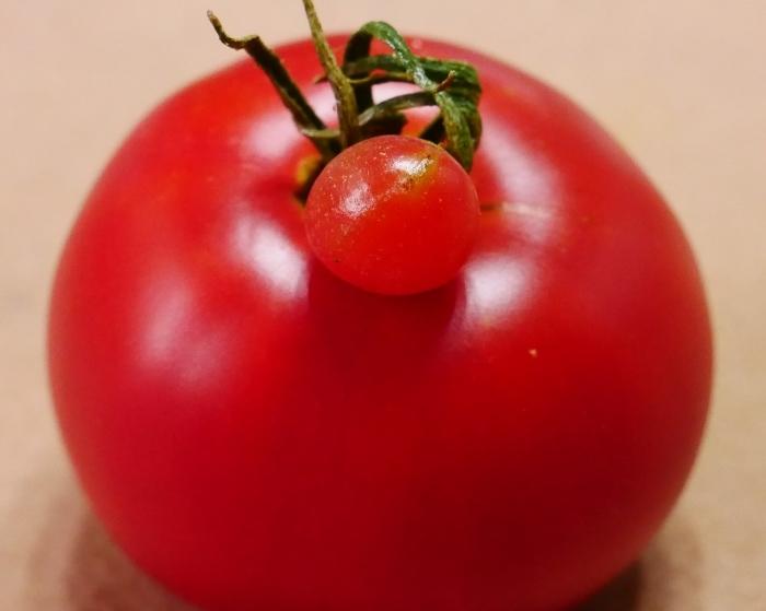 赤ちゃんトマト  2021-07-22 00:00_b0093754_22174000.jpg