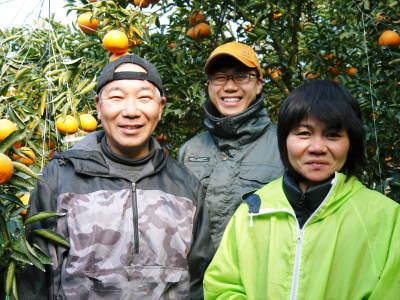 究極の柑橘『せとか』 美味しくて甘く、大きな果実を作り上げるための匠の摘果作業(2021)_a0254656_18323085.jpg
