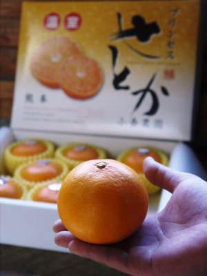 究極の柑橘『せとか』 美味しくて甘く、大きな果実を作り上げるための匠の摘果作業(2021)_a0254656_18445012.jpg