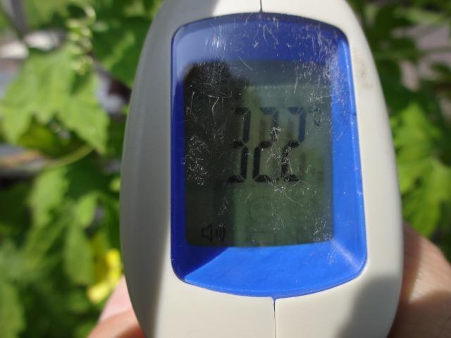 緑のカーテン(ゴーヤ・アサガオ)栽培実験R2.7.15_d0338682_16491338.jpg