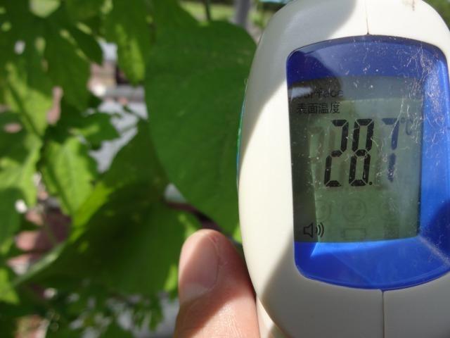 緑のカーテン(ゴーヤ・アサガオ)栽培実験R2.7.15_d0338682_16513044.jpg