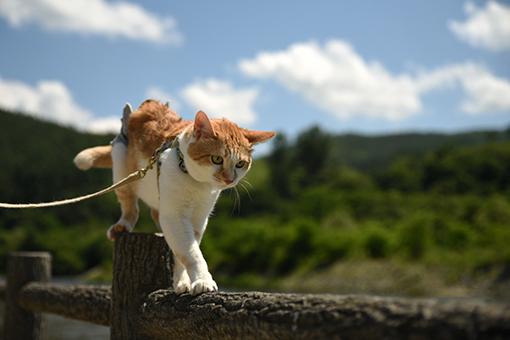 猫だから、散歩道_e0414191_03274573.jpg