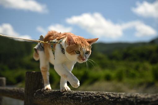 猫だから、散歩道_e0414191_03275135.jpg