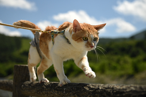 猫だから、散歩道_e0414191_03275614.jpg