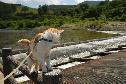 猫だから、散歩道_e0414191_03280243.jpg