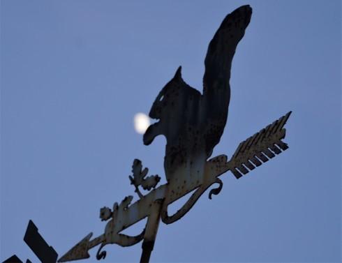 半月のクルミを食べるリス_f0006713_07460897.jpg