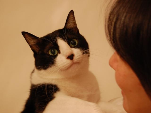 お誕生日猫 空永遠の20歳編。_a0143140_22133341.jpg