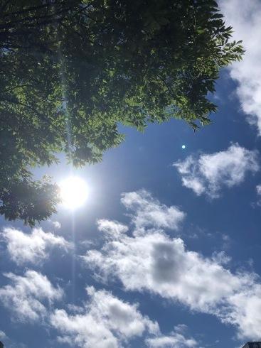 暑い日の楽しみ方_f0328051_19144125.jpg