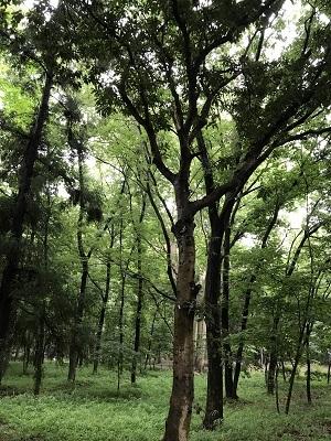 雨上がりの都立公園_e0090555_12034602.jpg