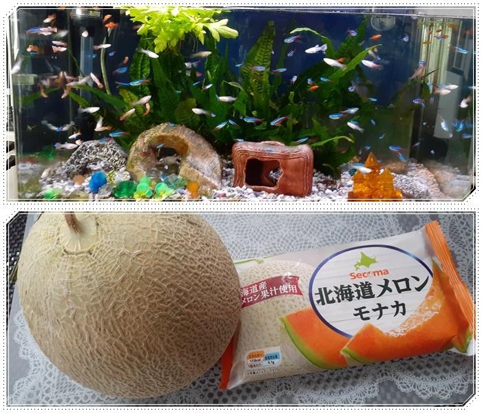 北海道とうきびモナカ_b0236665_12442606.jpg