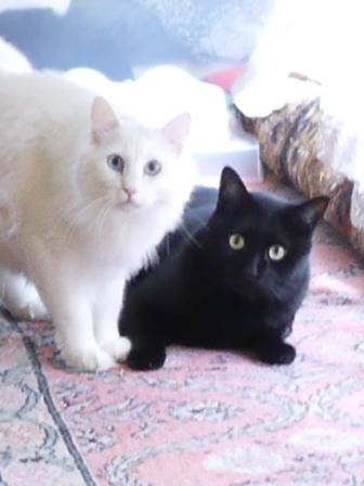 猫のお留守番 レオくんルナちゃん編。_a0143140_23184777.jpg