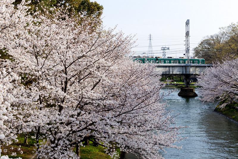 2021桜咲く京都  伏見濠川の桜と澱川橋梁_f0155048_23315076.jpg