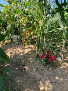 おやこ楽農くらぶの皆さんへお知らせ_f0079749_13002597.jpg