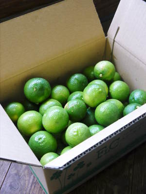 熊本県産!無農薬栽培の『種なしかぼす』令和3年の出荷は8月中旬からです!今年も順調に成長中!_a0254656_18061582.jpg