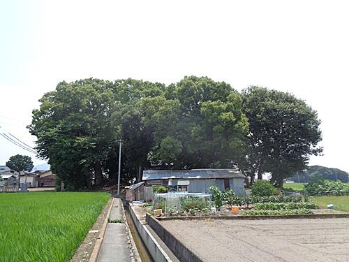 頂懸神社社叢_e0066586_07222572.jpg