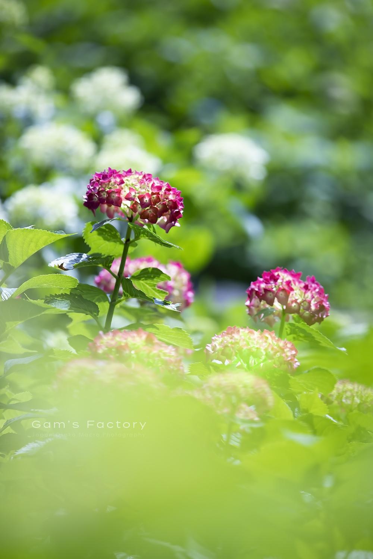 初夏の想い_f0195893_21561273.jpg