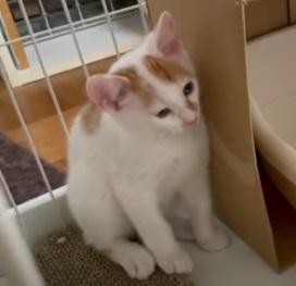 【YouTube】あの!凶暴だった三毛子猫のアケちゃんが変わりました!【kittens】_c0405294_21143625.jpg