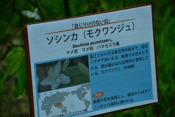 大阪市立大学理学部付属植物園 ④_a0240403_09432273.jpg